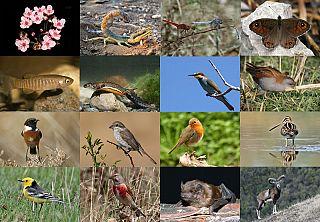 Biodiversità ed ecosostenibiltà  per salvare il mondo