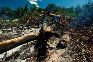 Deforestazione e Riscaldamento Globale