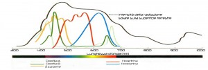 Frequenze assorbimento piante